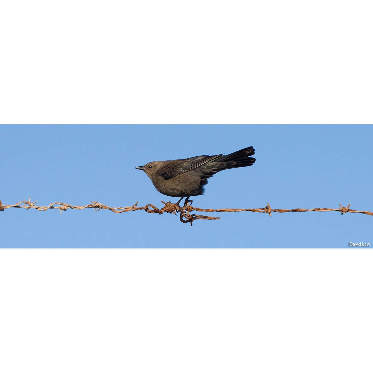 Bird on the Wind 30x90 copie
