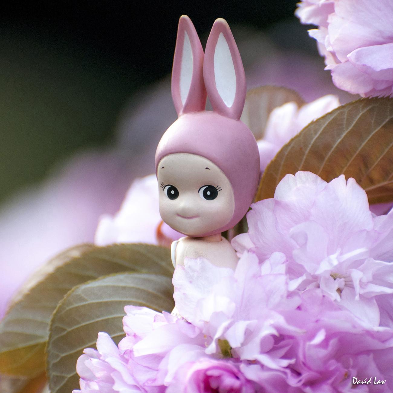Rabbit On Blossoms Squar copie