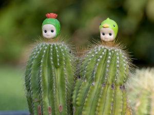 Cactus 30X30 copie