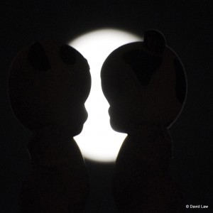 Moon Lovers AngelsSquare