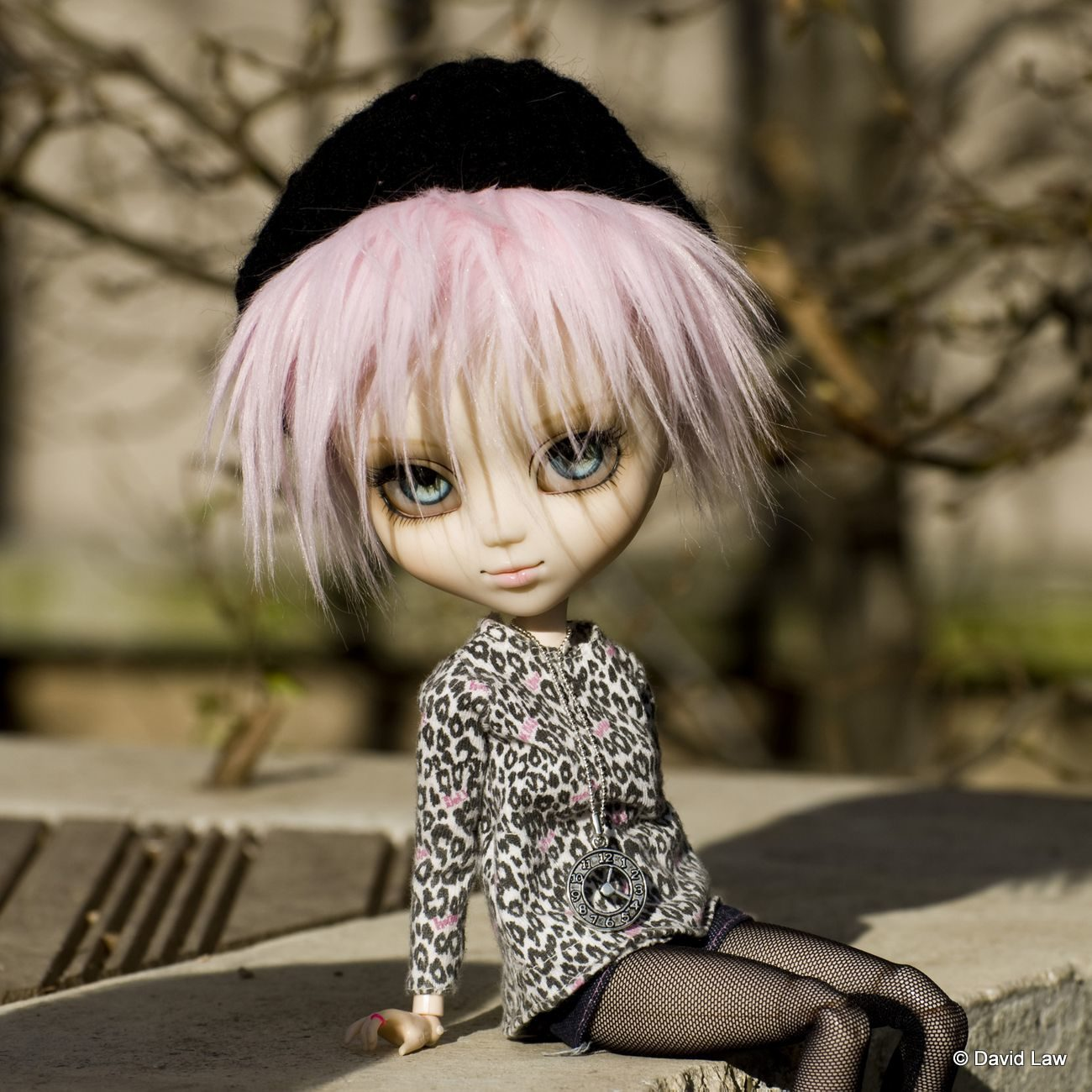 Nancy DollsSquare