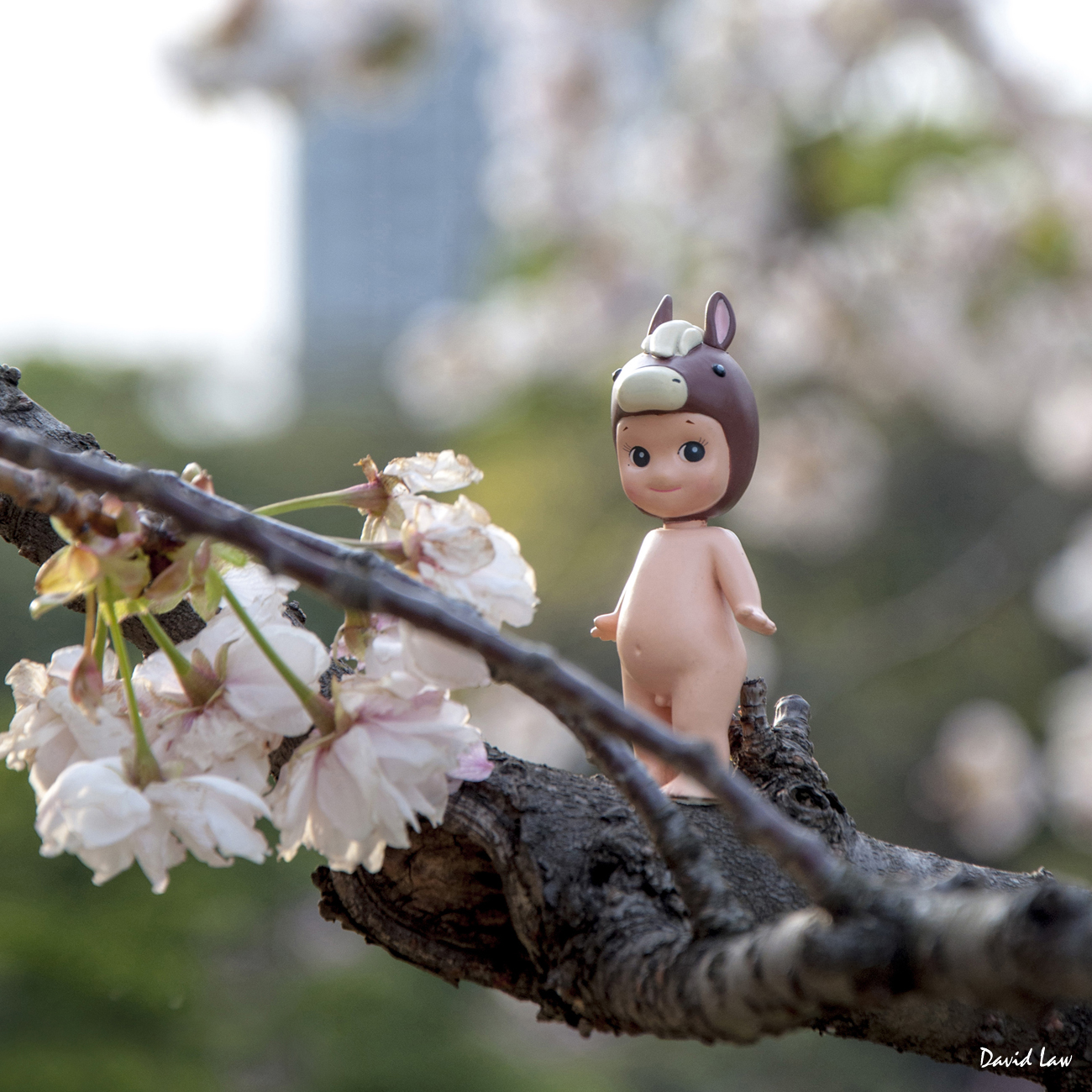 Cherry Blossoms V square copie