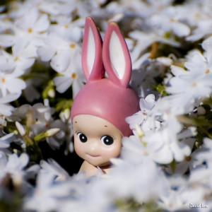 Rabbit on Blossoms II Squ copie