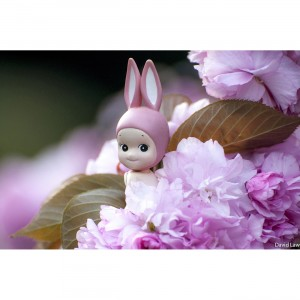 Rabbit on Blossoms copie