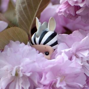 Zebra on Blossoms II Squa copie