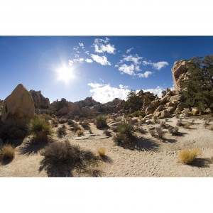 Joshua Tree Desert 40x60