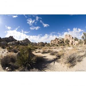 Joshua Tree Desert II copie