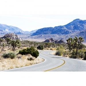 Joshua Tree road Desert 40x60