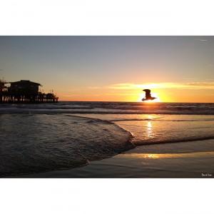 Seagal on sunset 40x60