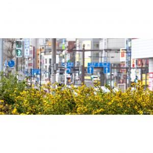 Tokyo 7 40X80 copie