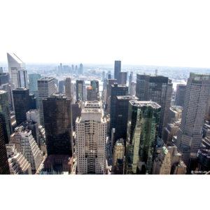 New York 41