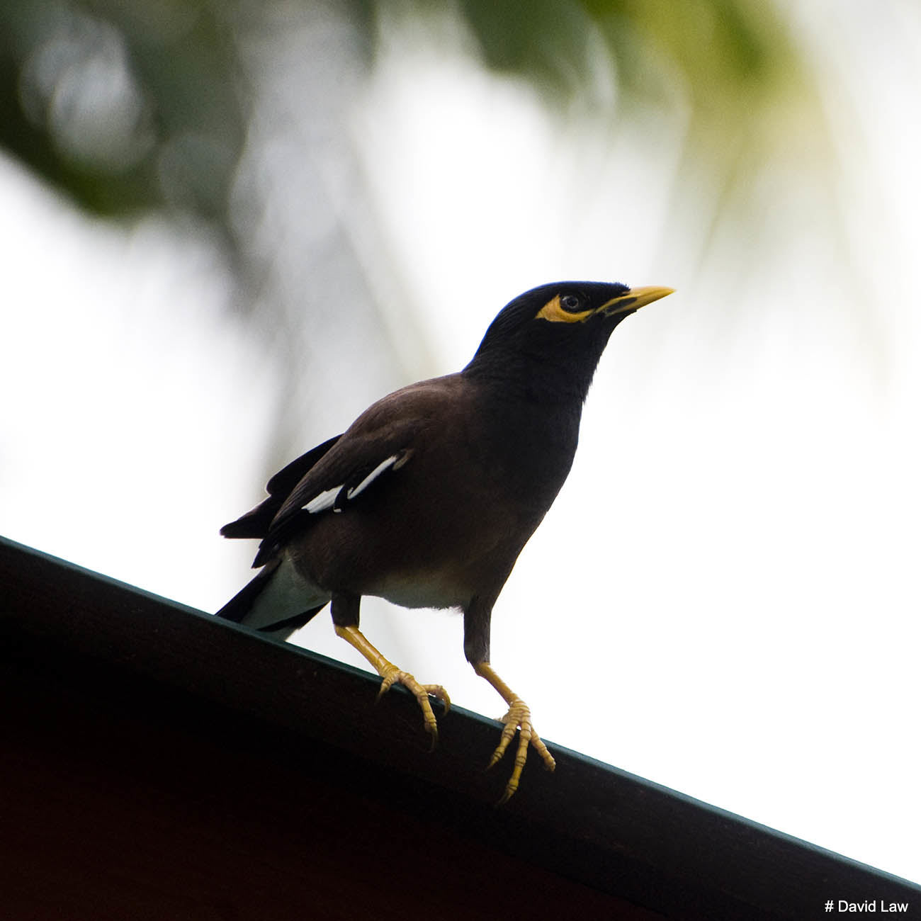 Bird 14 copie