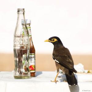 Bird 2 copie