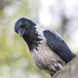 Bird 4 copie