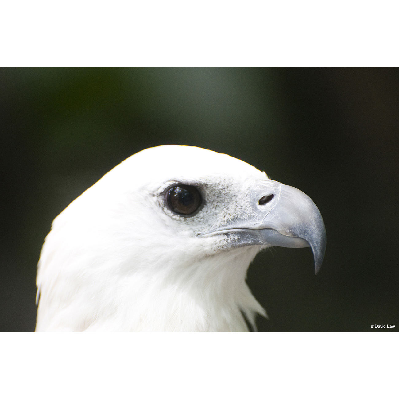 Bird 6 copie 1