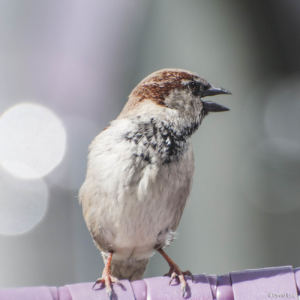 Bird 6 copie