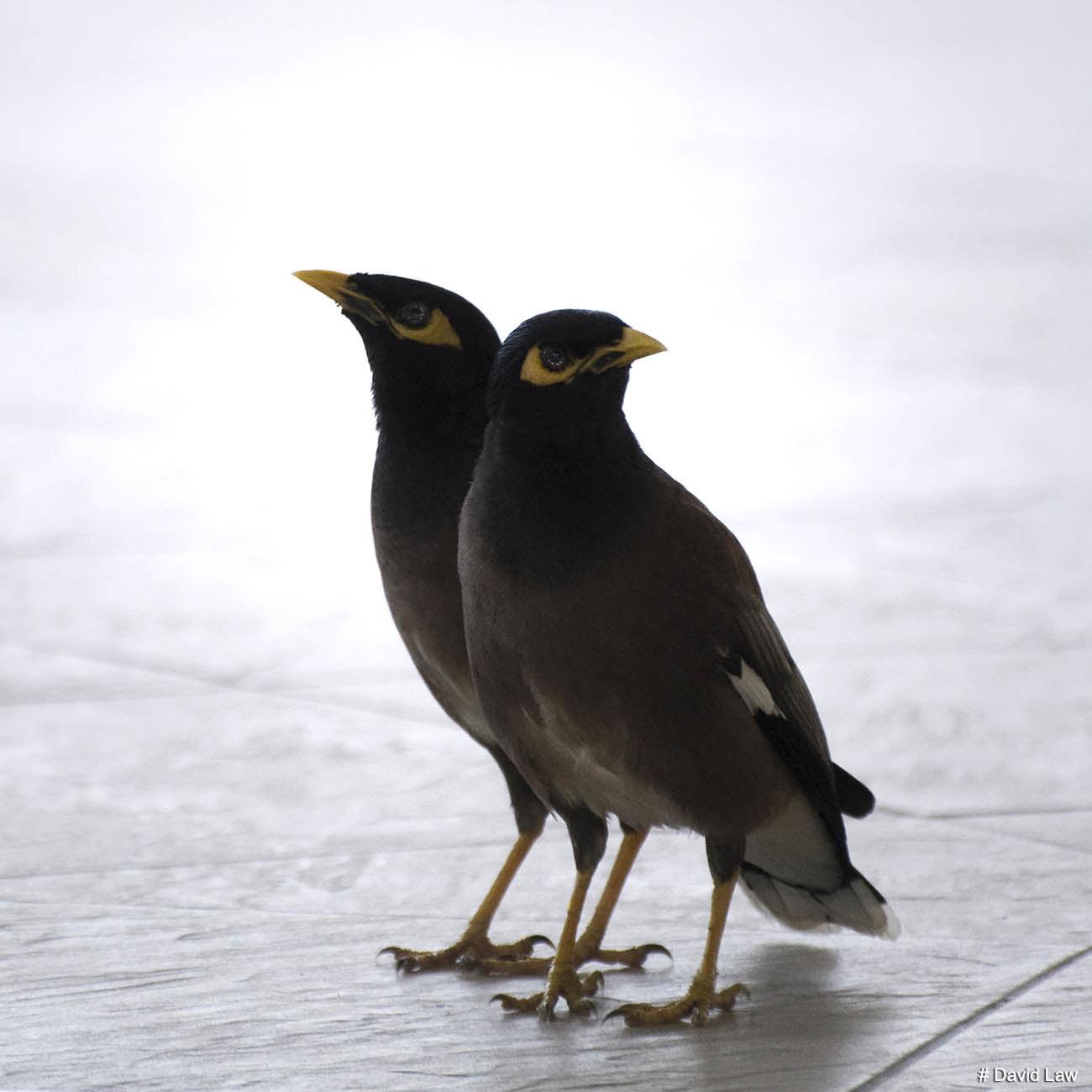 Birds 2 copie