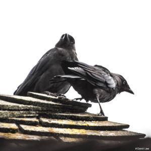 Birds copie