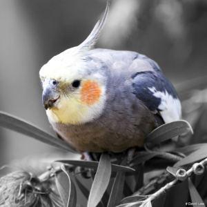 Blue Bird 1 copie