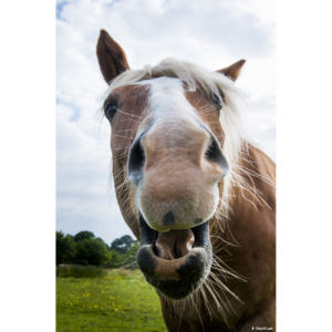 Funny Horse 2 copie