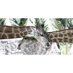 Girafes 40X80 copie