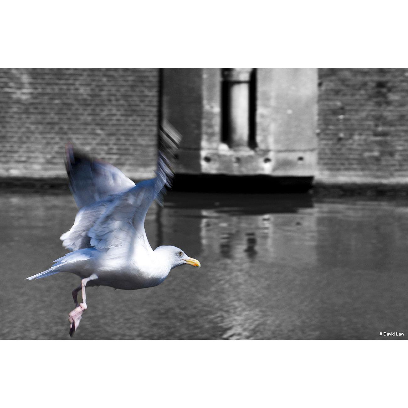 Mouette Amsterdam 1 copie