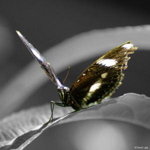 Papillon 1 copie
