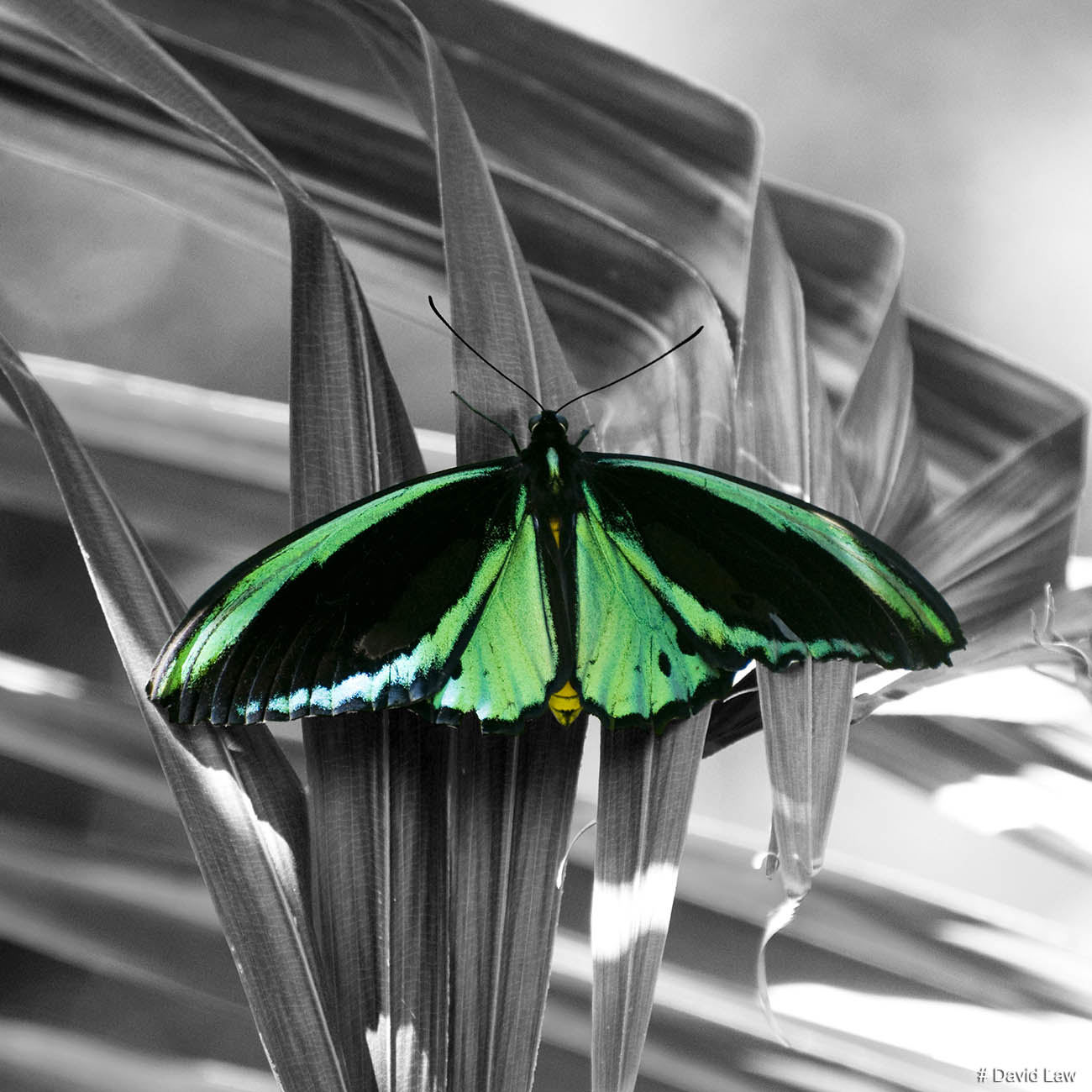 Papillon 2 copie
