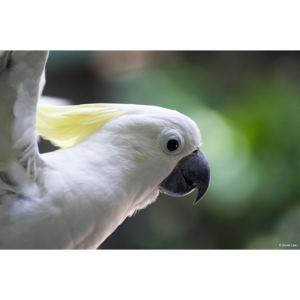 Perroquet copie 1