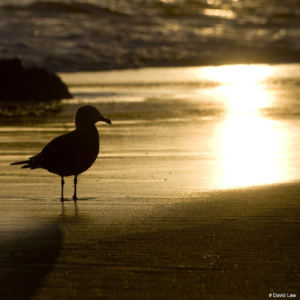 Seagull on sunset copie