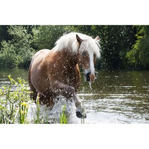 Wild Horse 2 copie