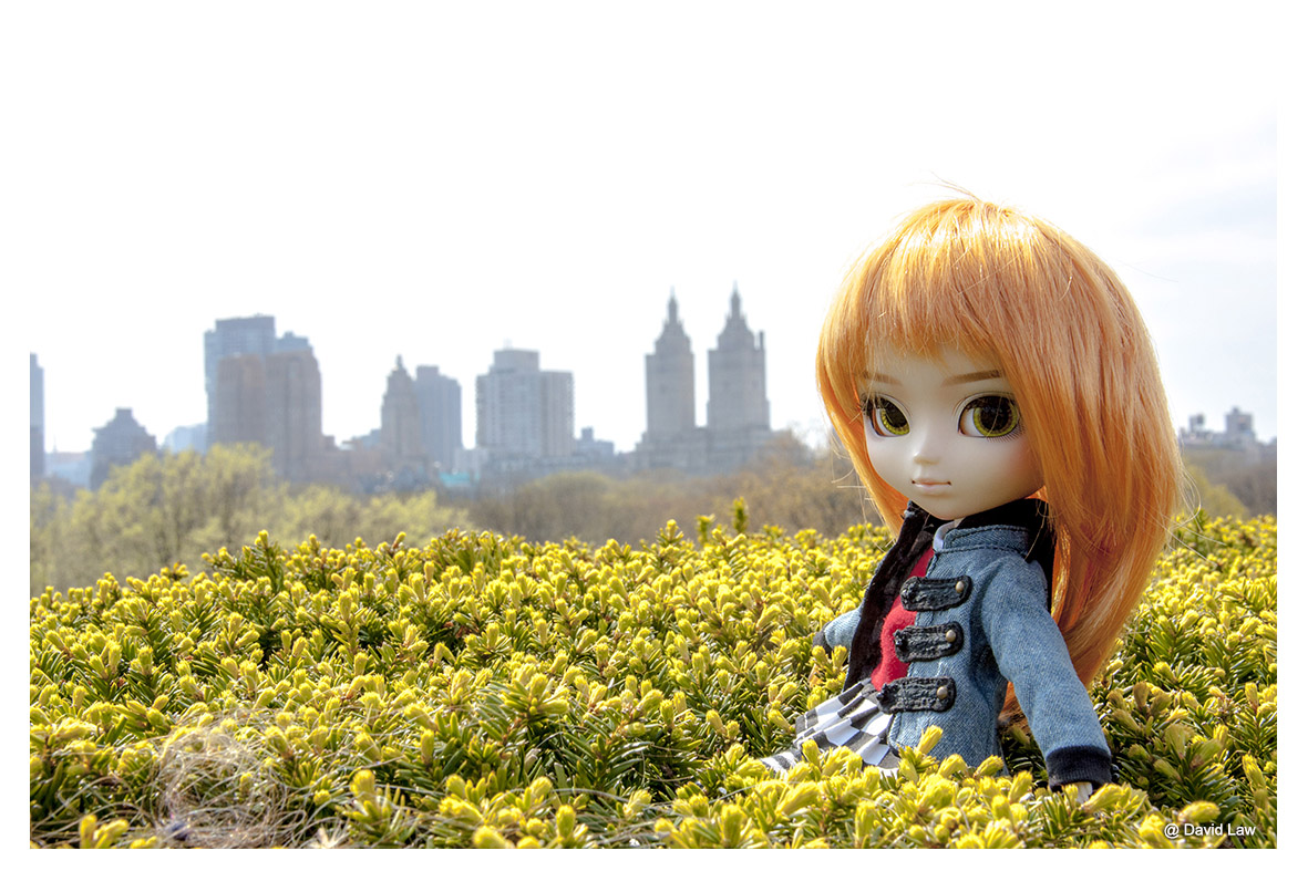 Central Park II ldh s0220
