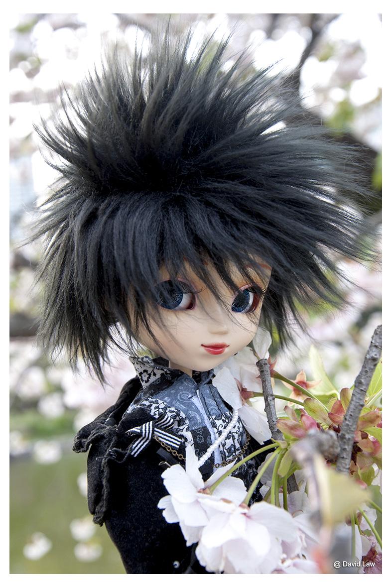 Cherry Blossom ldv s0220