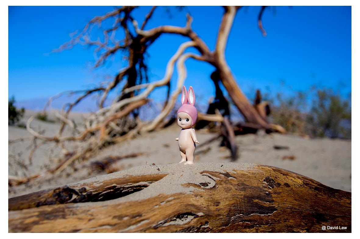Desert Angel lah s0220