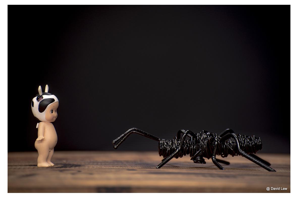 La fourmi lah s0220