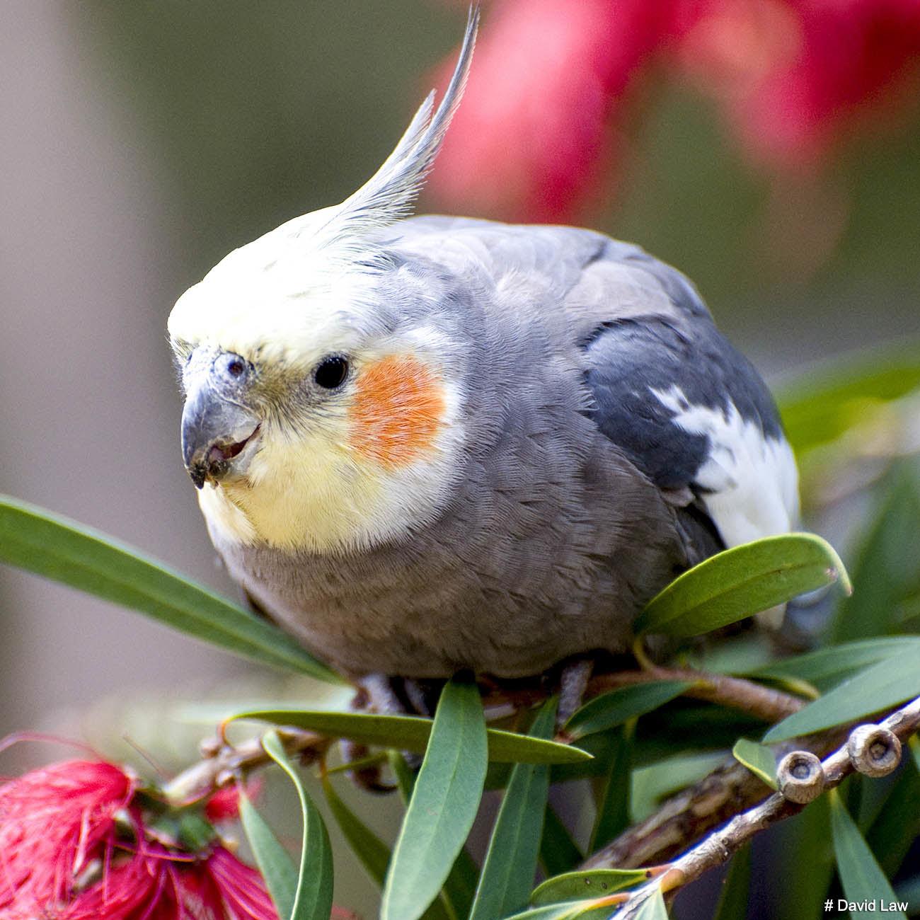 Bird 9 Square wns s0220