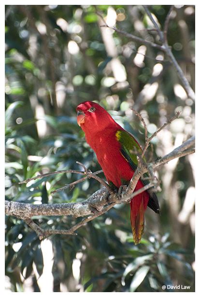Bird On Tree II copie