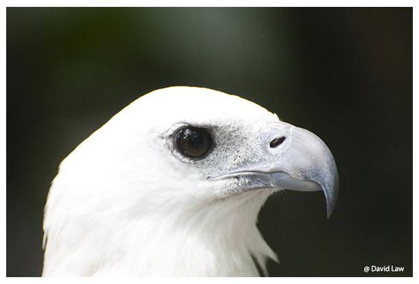 Bird VI copie