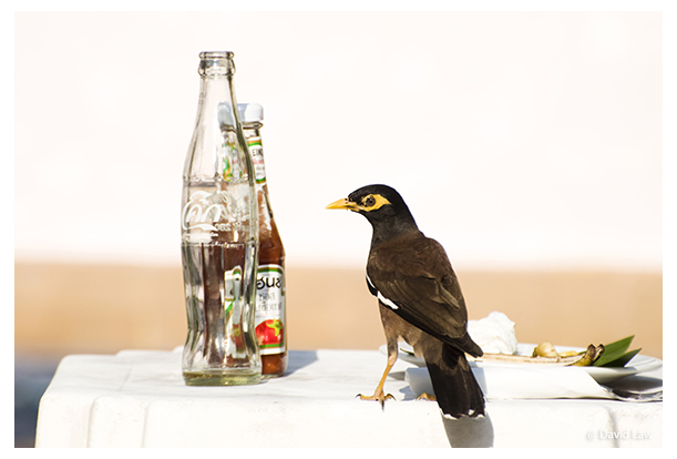 Bird and Coke copie