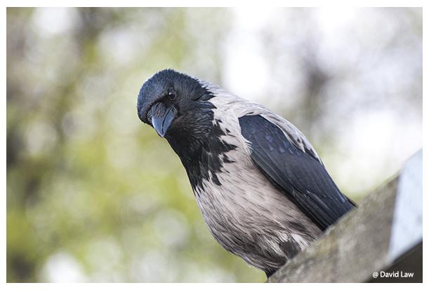 Bird on Roof II copie