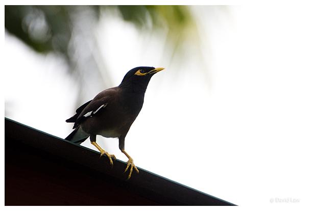 Bird on Roof copie