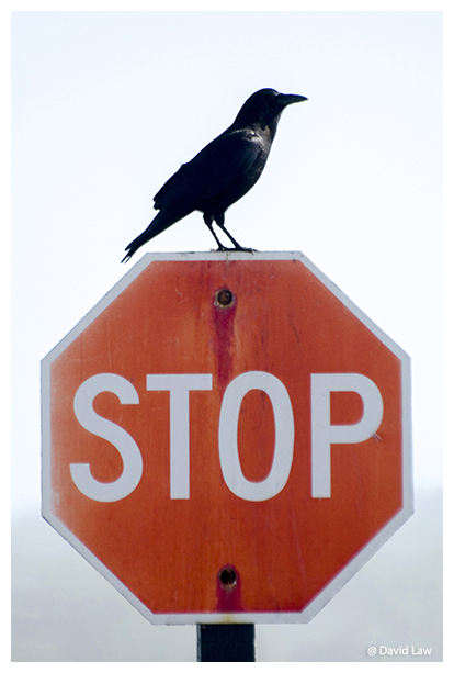 Bird on stop copie