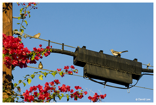 Birds on Tension copie