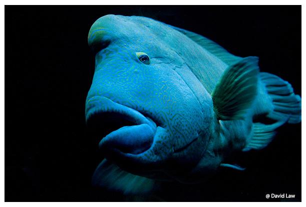 Blue Fish copie