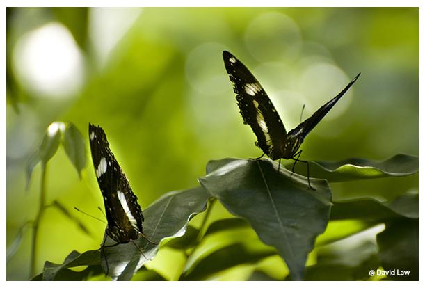 Butterflies copie