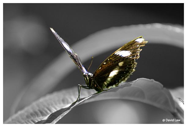 Butterfly copie
