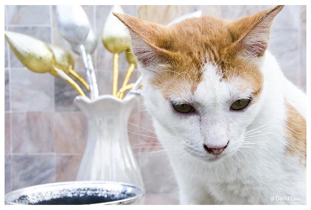 Cat IV copie