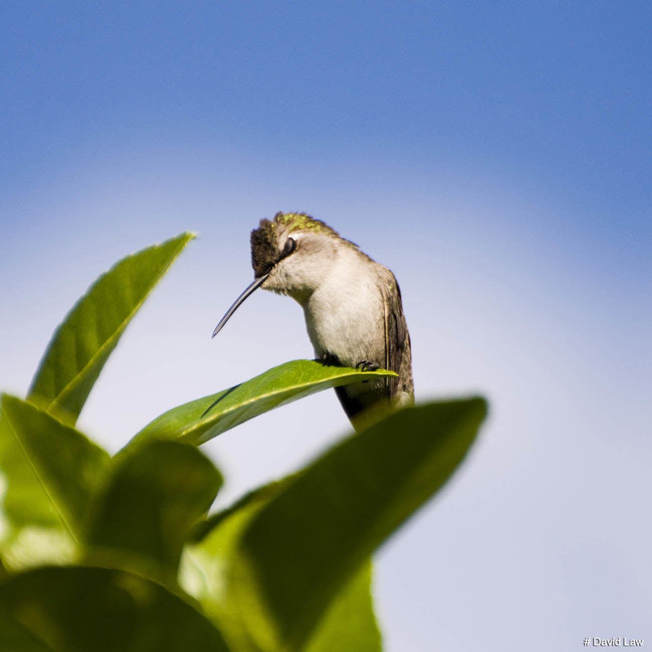 Colibri wns s0220
