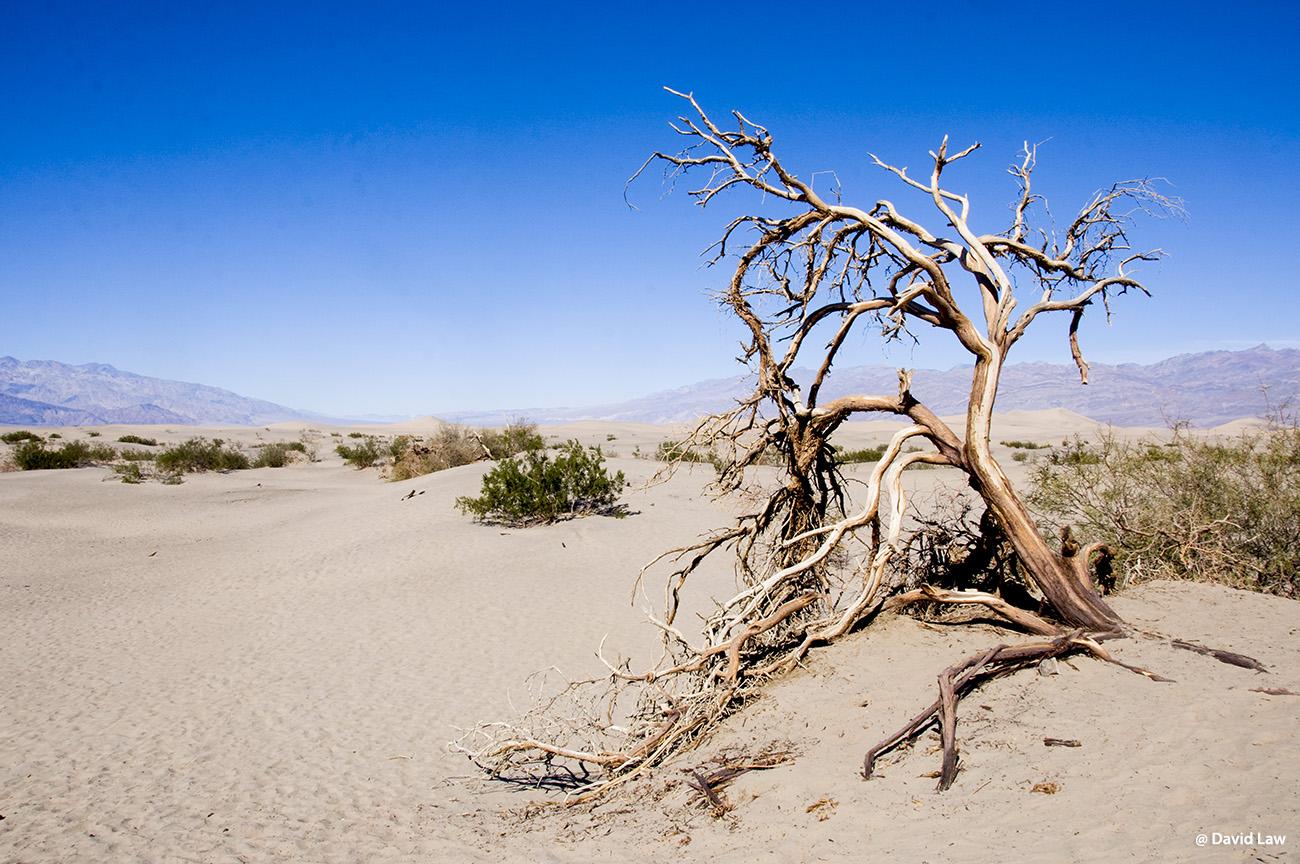 Desert de la soif