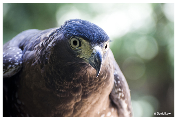 Eagle III copie